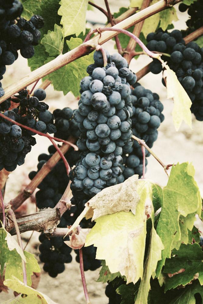 australia-wine_15