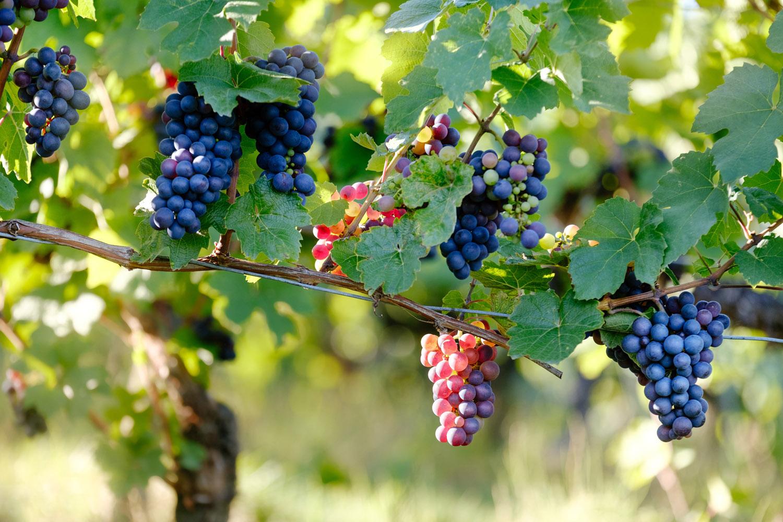 australia-wine_29
