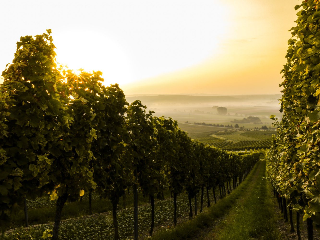 australia-wine_31