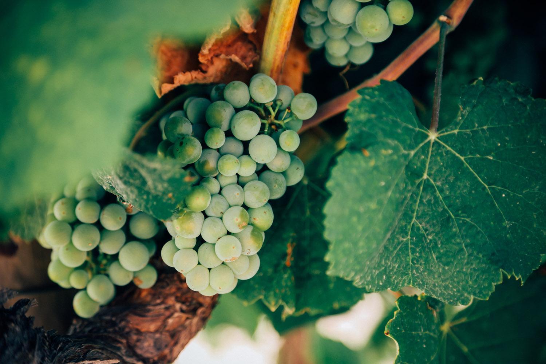australia-wine_33