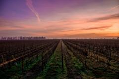 australia-wine_17